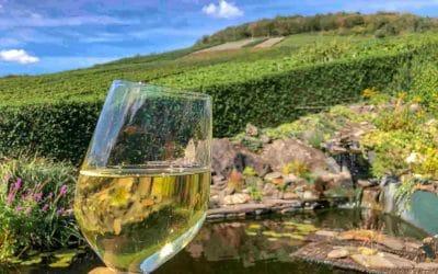 La Champagne: tra deliziosi vigneti francesi